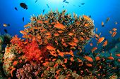 Coral and Fish in Ocean