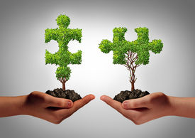 picture of reunited  - Team collaborate business concept with two human hands holding trees shaped as a jigsaw puzzle coming together as a success metaphor for growing cooperation and to build a teamwork agreement - JPG