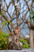 The Monkeys Sit