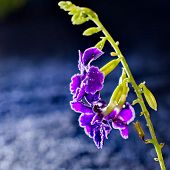 Artistic Macro Purple Flower With Bokeh