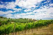 On of the many vineyards near San Gimignano in Tuscany, Italy.