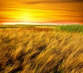 Beautiful landscape covered with golden summer grass