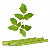 Angelica Herb Leaf And Stems
