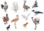 set of eleven birds isolated on white background