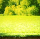 Green blurred background with grass