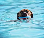 a dog having fun at a local public swimming pool