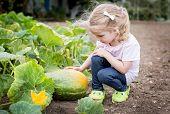 Cute Girl Sitting At The Pumpkin