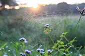 Spider On Web In Morning