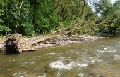 Knocked Down A Tree On The Riverbank
