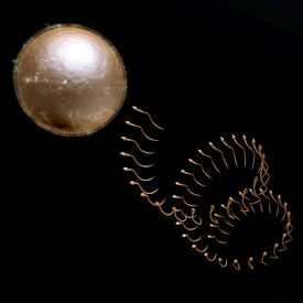 pic of coitus  - Digital 3D Illustration of a human Egg Cell - JPG
