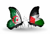 Two Butterflies With Flags On Wings As Symbol Of Relations Algeria And Palestine