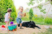dog looks at children in a sandbox