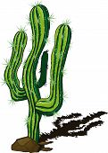 picture of spiky plants  - lone cactus among the rocks and rtbrasyvayuschy shadow drawn a sketch - JPG