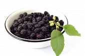 Fresh mulberry