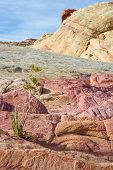 picture of valley fire  - sandstone desert landscape in Valley of Fire State Park in Nevada - JPG