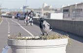Crow On The Street Planters