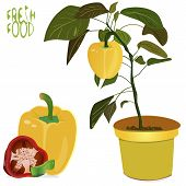 picture of pepper  - an illustration of a background of fresh whole and different sliced sizes of peppers with blossomin pepper tree with small yellow pepper in flower pot with a  - JPG
