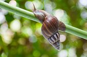 image of garden snail  - Image of garden snail on green bokeh background - JPG