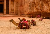 Jordan, Petra. Camels Near The Treasury