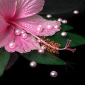 stock photo of hibiscus  - spa healthcare of pink hibiscus flower on green leaf with drops on zen stones and pearl beads in reflection water closeup - JPG