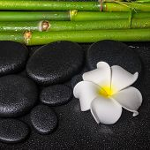 Spa Concept Of Zen Basalt Stones, White Flower Plumeria And Natural Bamboo With Dew, Closeup