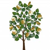 Money tree with leaves and gold coins