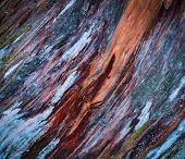 foto of rotten  - abstract background or texture Colorful the rotten wood - JPG