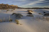 pic of guadalupe  - Salt basin dunes are made of Gypsum grains which are bright - JPG