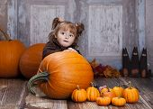 pic of gourds  - Adorable toddler surrounded by giant pumpkins - JPG