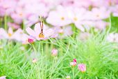 image of swarm  - In the garden there is the butterfly is swarming the flower - JPG