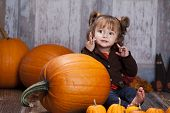 picture of gourds  - Adorable toddler with giant pumpkins - JPG