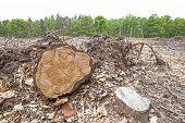 stock photo of deforestation  - Tree stumps on felled forest deforestation process - JPG