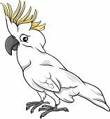 picture of cockatoos  - Cartoon Illustration of Funny Cockatoo Parrot Bird - JPG