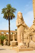stock photo of hieroglyph  - columns covered in hieroglyphics - JPG