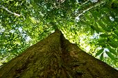 pic of rainforest  - Low angle view of a tree in amazon rainforest - JPG