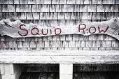 foto of martha  - Squid Row painted on a bench in Menemsha Massachusetts on Martha - JPG