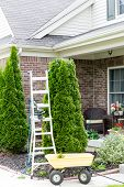 stock photo of tree trim  - Yard work around the house with a stepladder standing alongside an Arborvitae or Thuja tree with a small yellow metal cart for removing the branches trimmed off to maintain its tapering shape - JPG