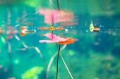 picture of cenote  - Mexican cenote underwater - JPG