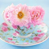 pic of blue rose  - Pink roses in a beautiful blue cup on a table - JPG