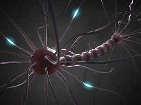image of neuron  - Interconnected neurons transferring information with electrical pulses - JPG