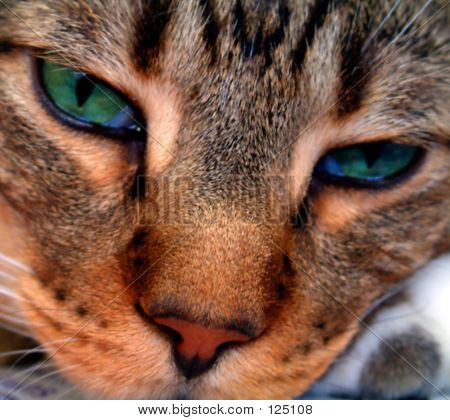Picture or Photo of Extreme close-up of a beautiful tabby cat with gorgeous green eyes. Blurry at full size. ok for small/web size use
