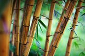 pic of bamboo forest  - Bamboo forest background - JPG
