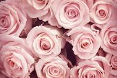 foto of white roses  - Roses Background - JPG