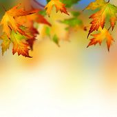 image of canada maple leaf  - Autumn - JPG