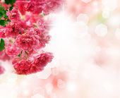 stock photo of beautiful flower  - Beautiful Flower Background - JPG