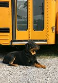 School Bus Waiting
