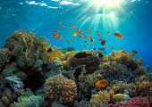 foto of coral reefs  - beautiful coral reef and many sea fish  - JPG