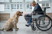 Happy Mature Female Sitting In Invalid Chair Indoors. She Is Looking At The Dog While Reaching Out H poster