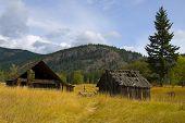 Old Barn In Golden Field