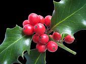 Holly 002-1